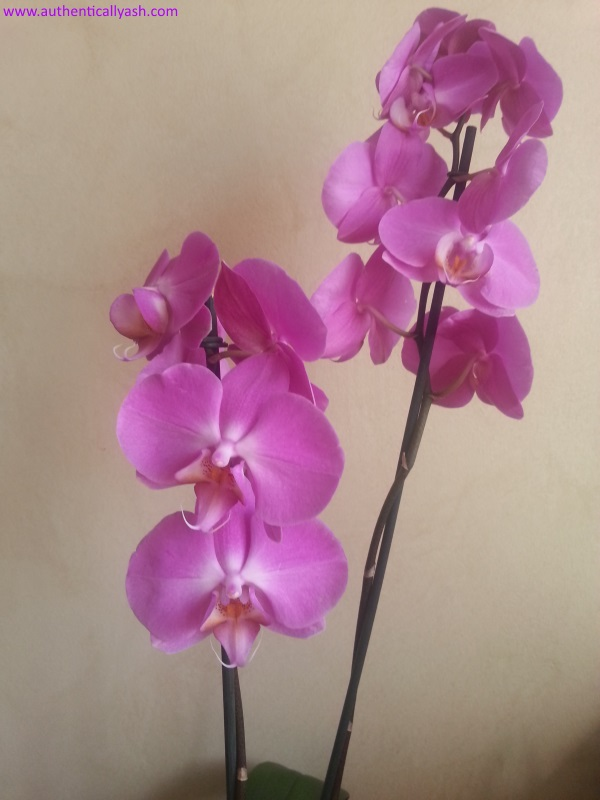 Orchid - a goodbye gift from Ouch! a touch of technology
